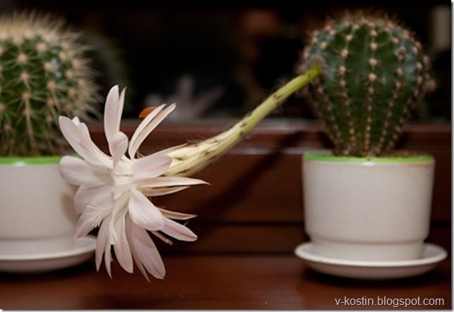 20100502_001745_flowers__mg_0661