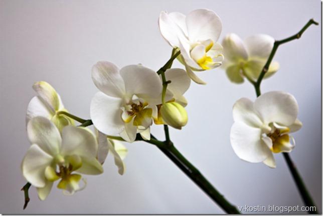 20100418_134454_flowers__MG_0165