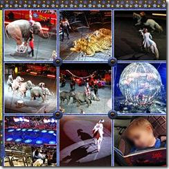 Circus2websm