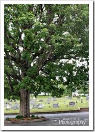 11 - A Tree