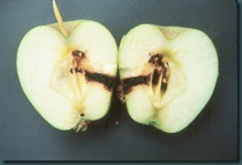 internal_codling_moth_damage