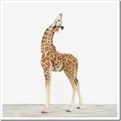 TN_Horizontal%20Giraffe_2