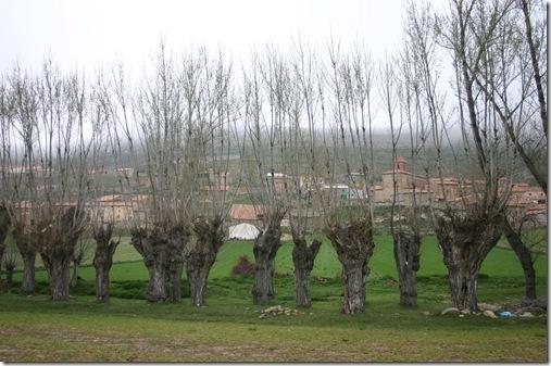 Árboles de trabajo