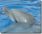 golfinho14