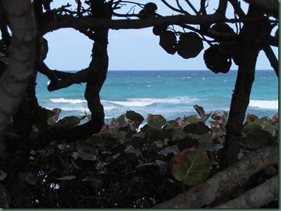 beach view through sea grapes