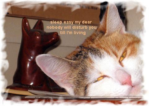Spavaj mirno, draga