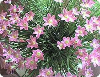 flores29