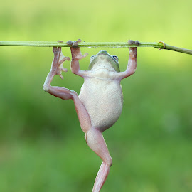 gym by Kurito Afsheen - Animals Amphibians