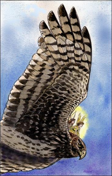 fairyhawk