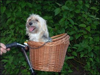 Kelly vind het heerlijk om te fietsen!