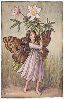 The Windflower Fairy;