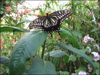 Longleat Butterfly Garden