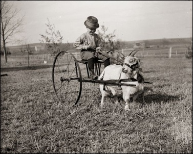 Boy Driving a Goat Cart, ca 1900