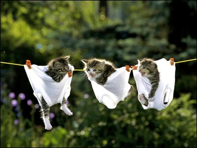 kittens in underwear