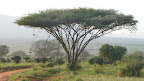 Kenya: Safari at Tsavo East Slideshow
