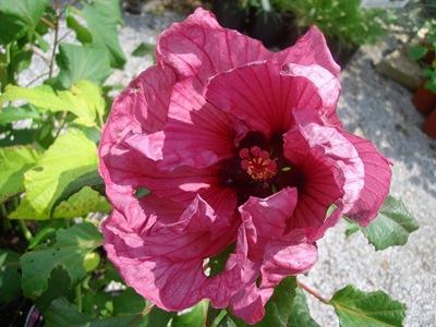 Weston Gardens 2009-08-01 020