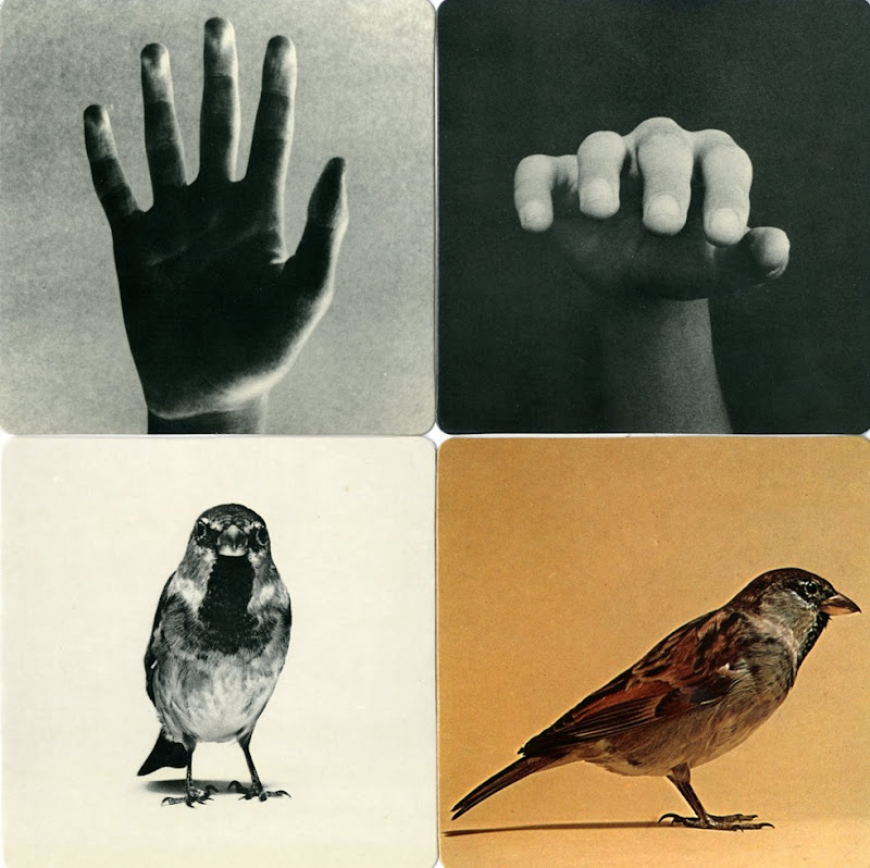munari images of reality (6)