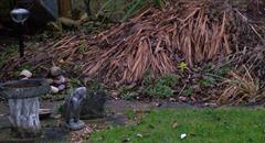 January - garden flatten blitz