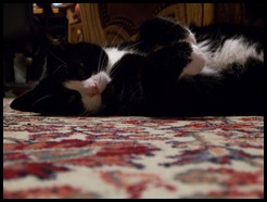 Catnap snooze
