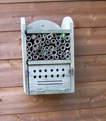 Leaf-cutter bees ... with two chambers complete