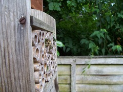 Leaf-cutter bees return in the Autumn