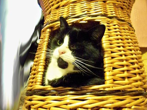Cat hide 1
