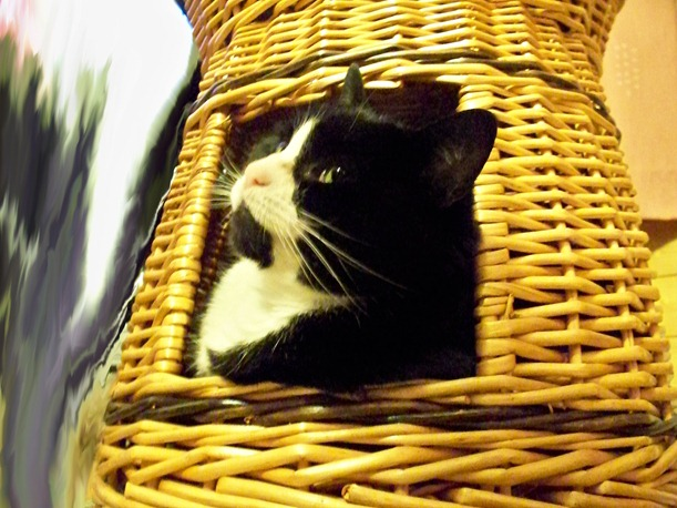 Cat hide 2