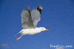 9905_03_46---Seagull_web