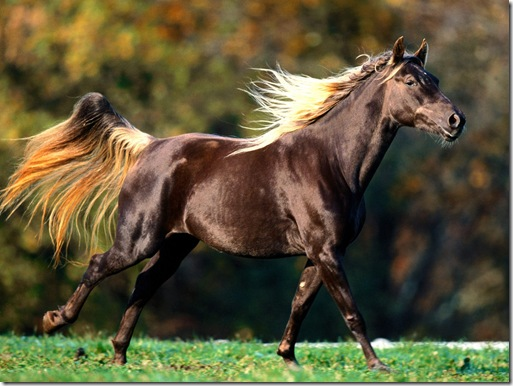 imagini cu cai