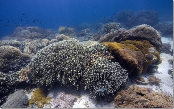 Coral reef covered with stony and soft corals, Philippines, Pacific Ocean