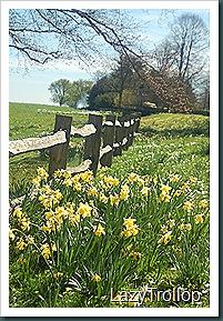 Nymans garden 07 April 2011 037