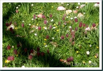 Nymans garden 07 April 2011 078