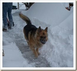 Cash snow 2009