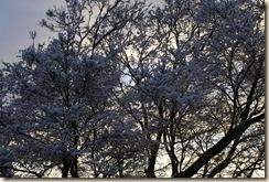 First Snow 09