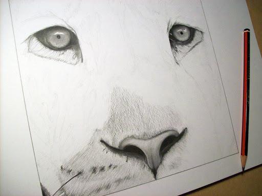 Drawing of lion finished  Dibujo de len terminado  Luis Mara