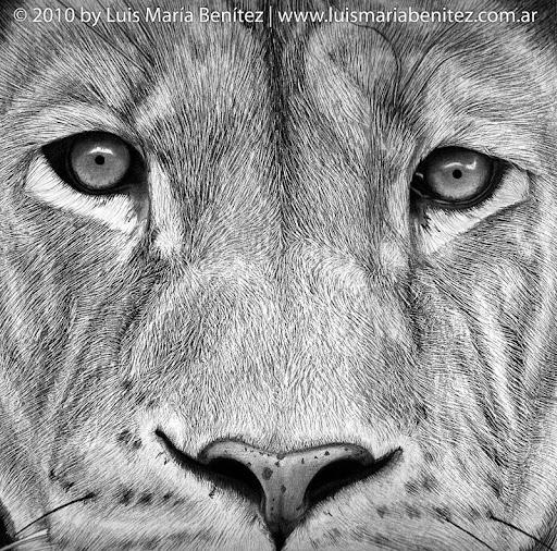 Lion illustration / Ilustración de un león © Luis María Benítez