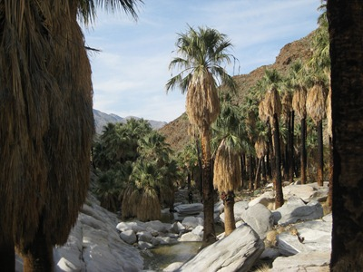 Palm Canyon, Palm Springs, California