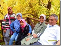 pokok kuning