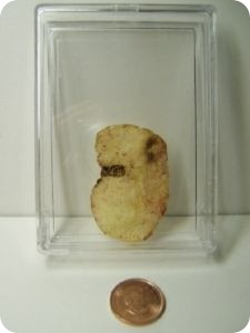StormTrooper Potato Chip