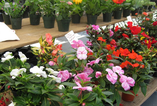 Potted Plants at the PB Farmers Market