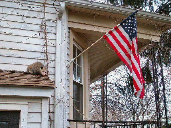 Possums Are Back Newark Usa