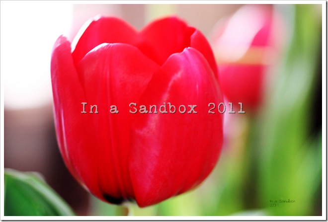 red-tulip-macro-with-logo