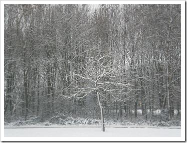 januari2010 018