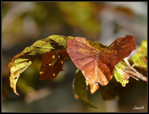 Le cœur de l'automne dans Actualité locale Coeur%20d%27Automne1210181_cadre