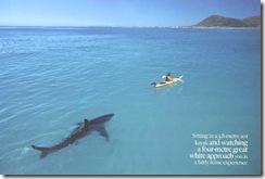 shark-kayak