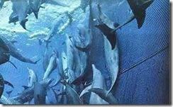 delfines-atrapados-en-redes