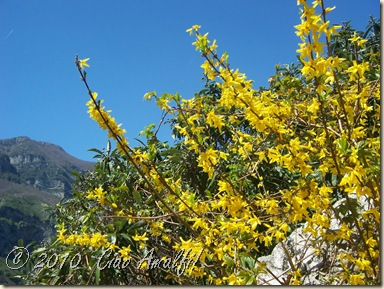 Ciao Amalfi Coast Blog Spring Blossoms2