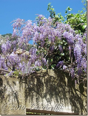 Ciao Amalfi Coast Blog Spring Blossoms4
