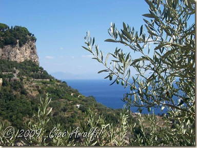 Ciao Amalfi Coast Blog Olives