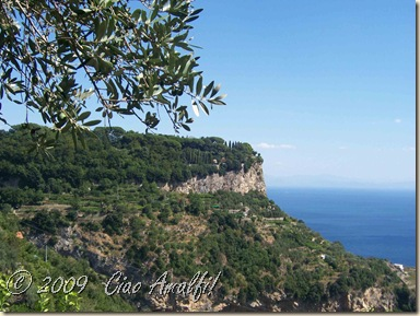 Ciao Amalfi Coast Blog Ravello Olives